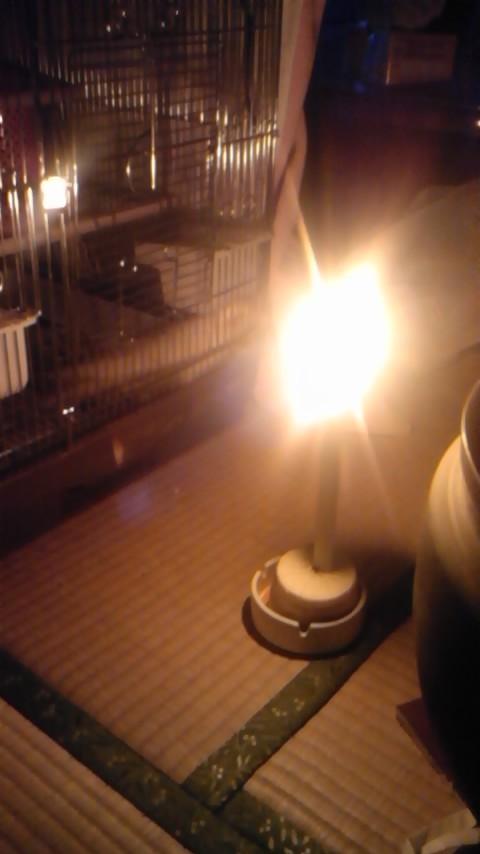 2011年3月11日17時56分ペットの鳥の前に、ばっぱ手作りの燭台でろうそくを灯していた