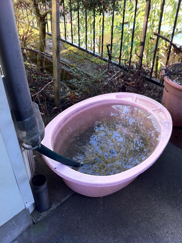 雨水をため生活用水に