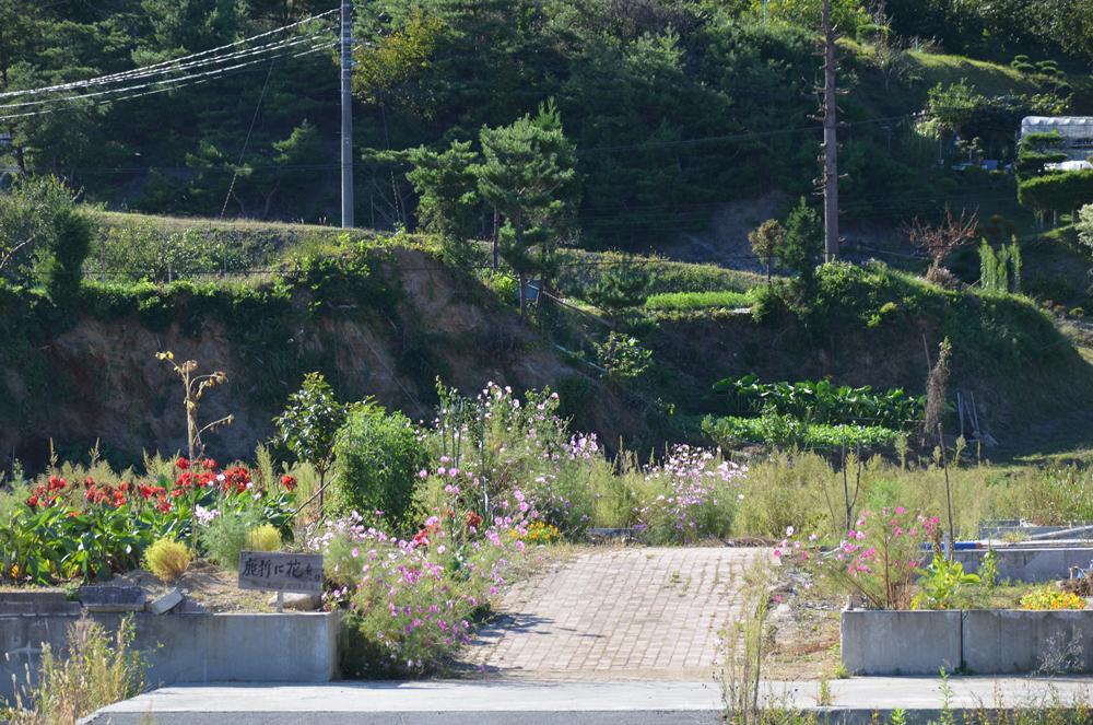 自宅跡地を植えられた花々