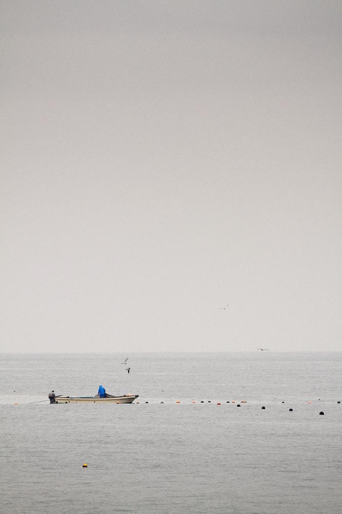 沖合で漁をする船