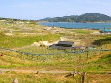陸前高田定点観測写真17〈米崎りんご畑 1〉
