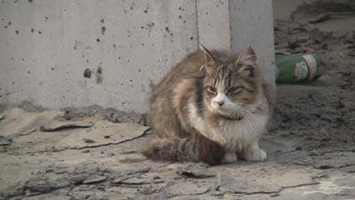 『犬と猫と人間と2 動物たちの大震災』の全国公開が始...
